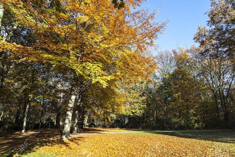 Parque Tiergarten em Berlim em outubro
