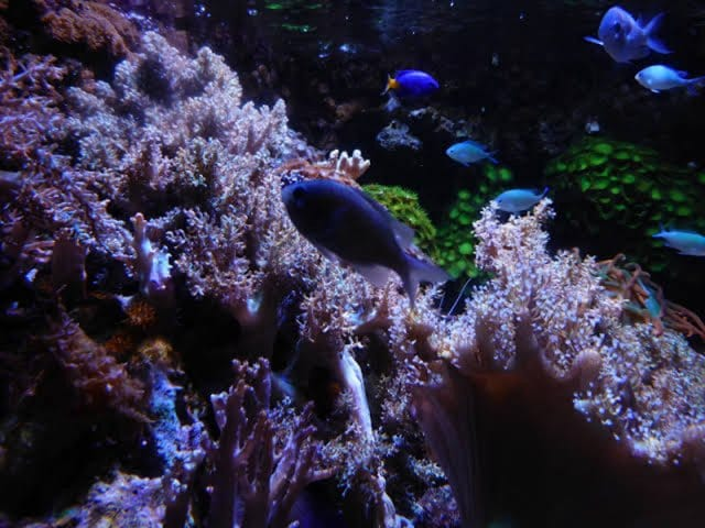 Ingresso do Sea Life Munich